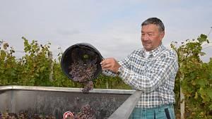 Vinobraní v říjnu 2021 na vinicích u Rychtaříků ve Kvíci