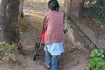 Skupina sociálně slabých obyvatel, kteří žijí roky v otřesných podmínkách v bakovském statku, se poměrně často potýká s různými onemocněními. Majitel objektu je Kladeňák a absence sociálního zařízení v domě, kde bydlí i děti, ho netrápí.