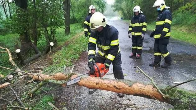 Odstraňování padlého stromu po silném větru a dešti.