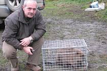 Svárovský bobr se nechal nalákat na osikové dřevo a bobří feromony. Znalci zatím nemohou s určitostí říci, zda se jedná o samičku či samečka.