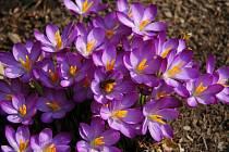 Probouzející se jaro v okolí Tuchlovic.