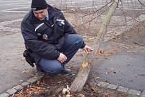 Dvacetiletý řidič skolil nemilosrdně lípu na slánském náměstí.Strom je definitivně zničený. Ke zranění naštěstí nedošlo.Škoda na dřevině je ale značná, nahradit by ji měl viník.