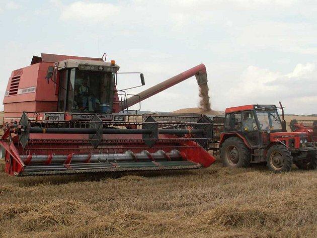 Letošní úrada na Kladensku je chabá, sucho se podepsalo na hektarových výnosech