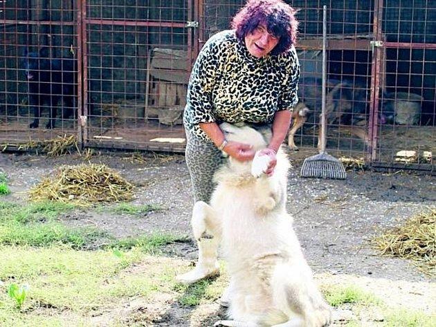Dagmar Harigelová svoje psy miluje a jak sama už mnohokrát řekla, dala by za ně život.