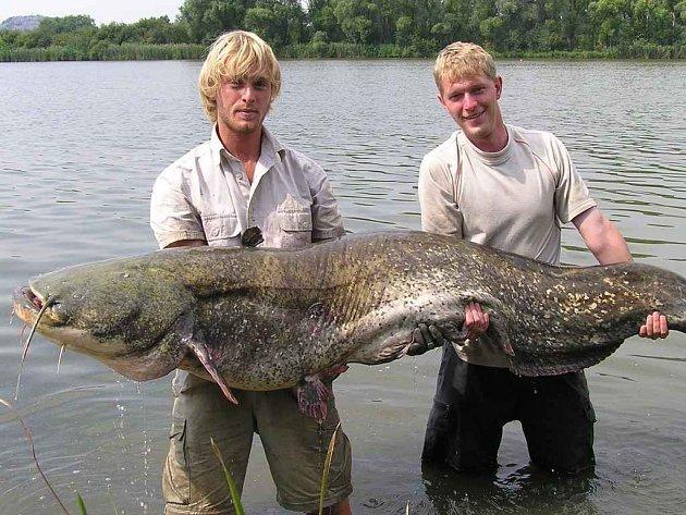 Za takovými obřími sumci někteří rybáři cestují až dva tisíce kilometrů daleko. Jakub Vágner (vlevo) tohoto sumce chytil na Záplavách.