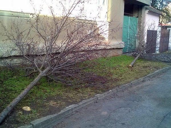 Jabloně, které dobrovolníci zasadili při adopci stromů, někdo podřezal a nechal na místě.