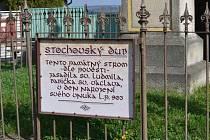 Svatováclavský dub na Stochově.