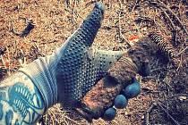 MUNICE nalezená v minulých dnech v lese v Rozdělově.