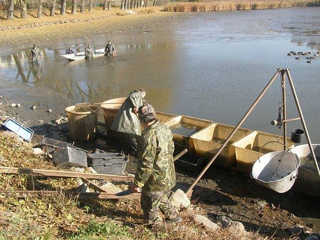 Pravidelný výlov rybníka Bulhar v Unhošti.