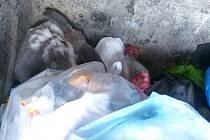 Zmrzačený ale živý králíček byl hozený v kontejneru