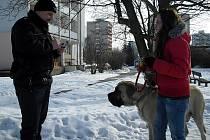 Strážníci městské policie se v minulém týdnu zaměřili na kontroly chovatelů psů po celém městě Kladně.