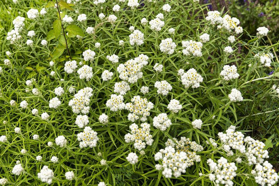 Květiny v Kladně.