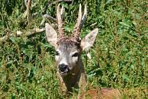 Pro zvěř je nyní důležitá ohleduplnost návštěvníků lesů.