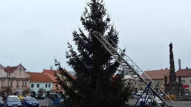 Ve Velvarech na náměstí už stojí vánoční smrk.