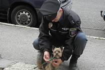 Strážníci kontrolují psy bez rozdílu velikosti.