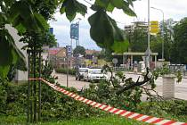 Padající větve starých stromů dělají Slaňákům velké starosti. Již několik týdnů mají obavy o svoji bezpečnost.
