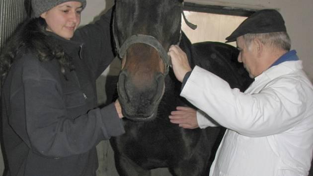 Návštěva stáje zástupci okresní veterinární správy prověřila, že ve stájích vedených Josefem Králem a Kateřinou Chloupkovou, je vše v naprostém pořádku a o zvířata je postaráno skvěle.