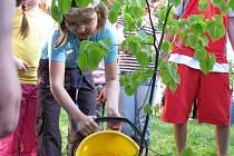 Děti ze Základní školy ve Pcherách zasadily na Den Země tři lípy