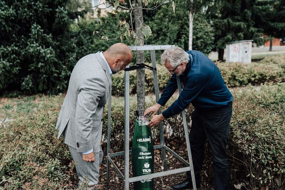 Unikátními vaky svodou zachraňuje Kladno stromy před suchem.