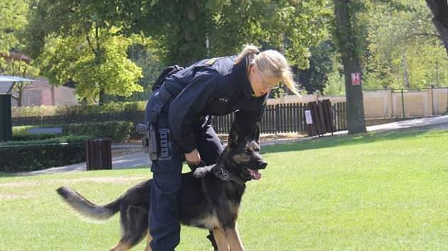 Tříletý policejní pes Hakim dopadl recidivistu.