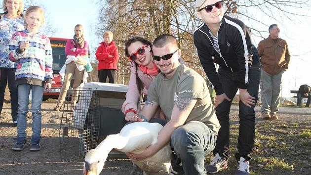 LABUŤ VELKOU, vyléčenou v kladenském Avesu,  vypustili zpět na Vltavu známí herci Kristýna Leichtová a Filip Kaňkovský, kteří už v minulosti projevili zájem o podporu činnosti Pražské zvířecí záchranky.