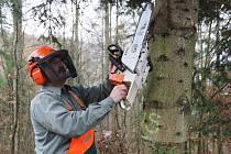 Podle vyjádření Lesů ČR bude na místě vytěženého lesa na Lapáku porost opět obnoven. Důvodem kácení stromů je prý jejich vysoké stáří.