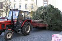 Transport a vztyčení vánočního stromu ve Slaném 2009