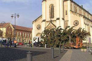 Krátce před polednem byl strom usazen na své místo na náměstí Starosty Pavla v Kladně.