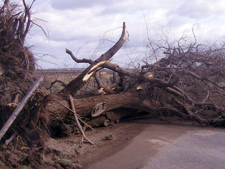 Víkendovému řádění vichřice neodolala ani tři sta let stará lípa na rozcestí mezi Žižicemi, Drnovem a Zvoleněvsí.