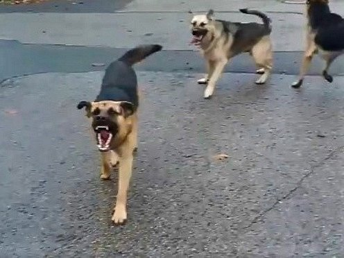 V Kyšicích napadli ženu volně pobíhající psi.