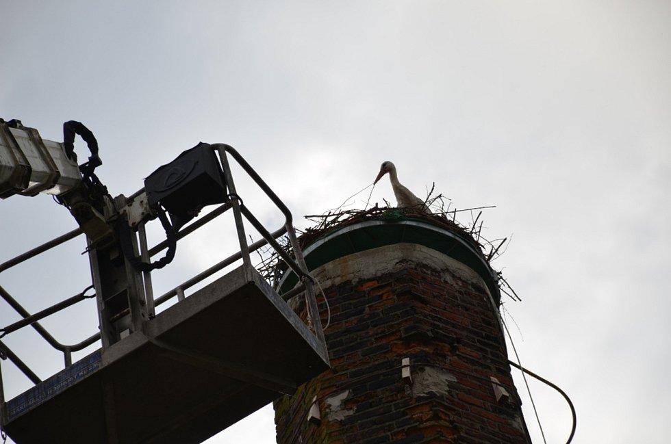 Kroužkování čapího mláděte v Kačici na komíně.