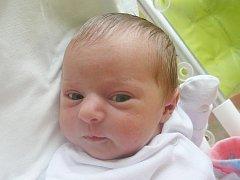 Nela Korčáková, Šanov. Narodila se 13. prosince 2014. Váha 3,50 kg, míra 50 cm. Rodiče jsou Lenka a Luláš Korčákovi (porodnice Kladno).