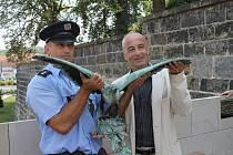 Velitel Obvodního oddělení Policie České republiky ve Slaném Michal Strieborný předává nalezeného sokola slánskému starostovi Ivu Rubíkovi.