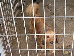 V buštěhradském psím útulku na svůj nový domov nyní čeká přes sto psů.