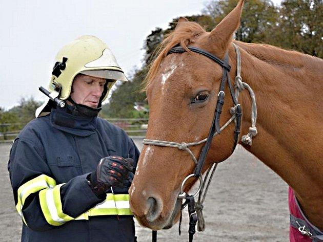 HASIČI SI V JÍZDÁRNĚ u Smečna vyzkoušeli základy práce s koněm a nasazení ohlávky.