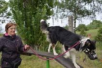 Den otevřených dveří na psím cvičišti u Ploché dráhy ve Slaném.