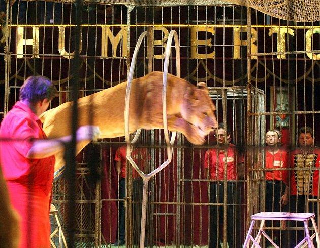 Cirkusu Humberto se nyní Kladeňáci nedočkají.