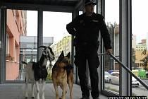 Kozel Hurvínek a pes Zak ve víru velkoměsta.