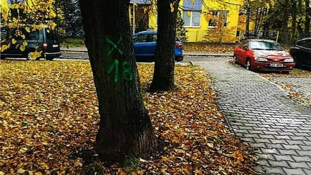 Nevhodně vysázené stromy.