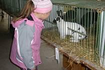 ávštěvníci výstavy chovatelů ve Velvarech obdivovali krásné ušáky nebo si se zájmem prohlíželi klece s exoty.