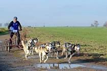Závody psích spřežení Stochov 2019.