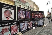 Výstava fotek potratů ve Slaném na pěší zóně.
