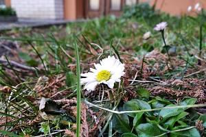 První poslové jara už se hlásí na svět.