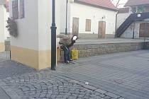 Opilci mají patrně zálibu v kálení na zdi.