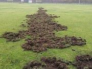 Další útok divočáků na hřiště v Libušíně má devastující účinky.