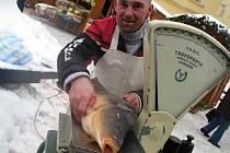 VÁNOČNÍCH KAPRŮ na Floriánském náměstí v Kladně včera rychle ubývalo. Na štědrovečerní tabuli zůstává tradiční česká ryba favoritem.