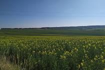 Řepkové pole. Ilustrační foto.