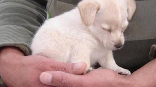 Zatoulané a opuštěné psy strážníci zachraňují skoro každý den.