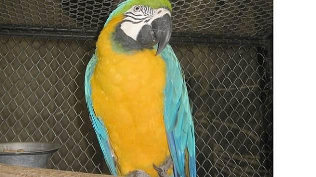 Jeden z mnoha krásných exponátů-papoušek Ara.