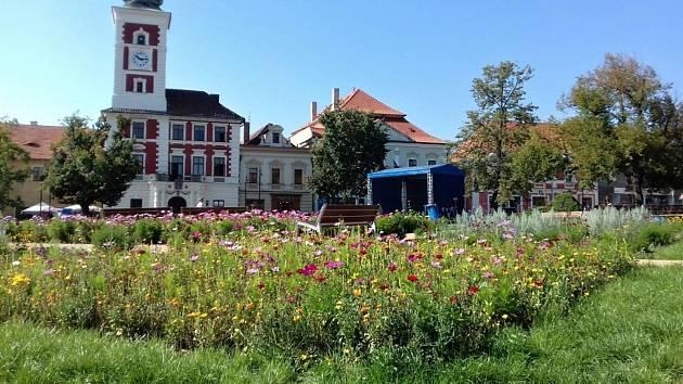 Lépe zadržet vodu v krajině se rozhodlo už letos sousední Slaný a nechalo založit na Masarykově náměstí květnatou louku.